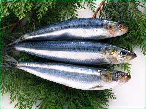 fishSeld_11