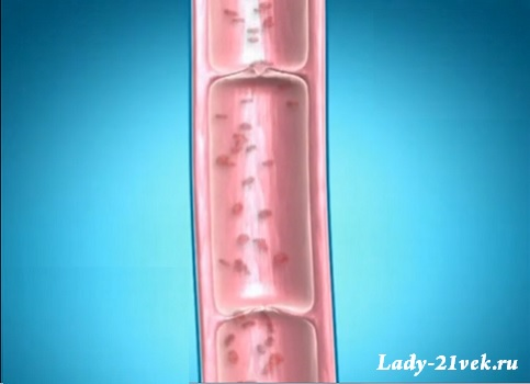 вид нормальной здоровой вены