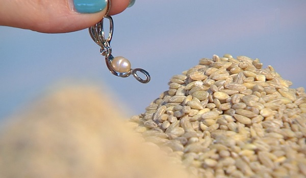 перловка и её свойства