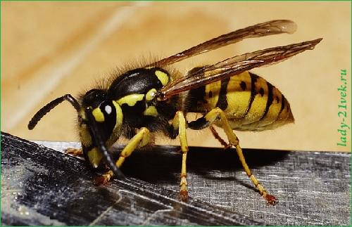 об укусе осы